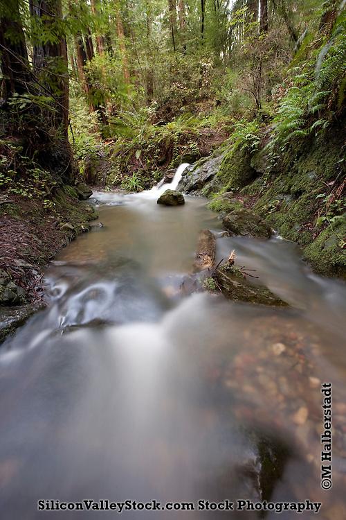Cascade Falls, Mill Valley, CA