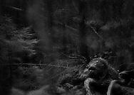 Ur utställningen John Bauers skogar av Mats Andersson.