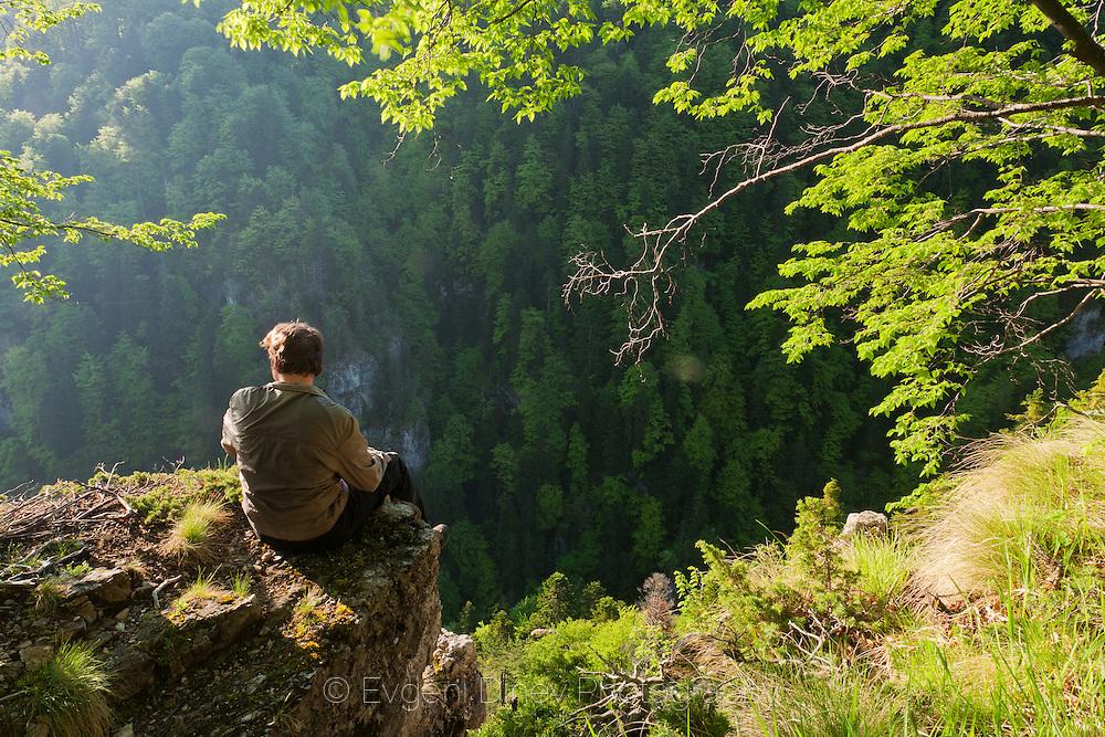 Steneto forest reserve in spring
