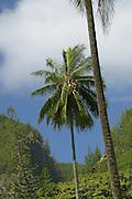 Mangareva, Gambier Islands, French Polynesia<br />