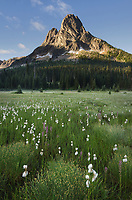 Liberty Bell Mountain seen from meadows of Washington Pass, North Cascades Washington