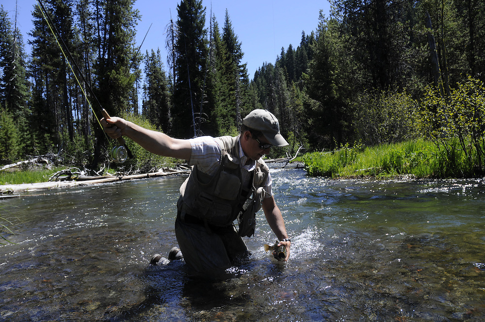 An angler lands a brook trout on small stream.