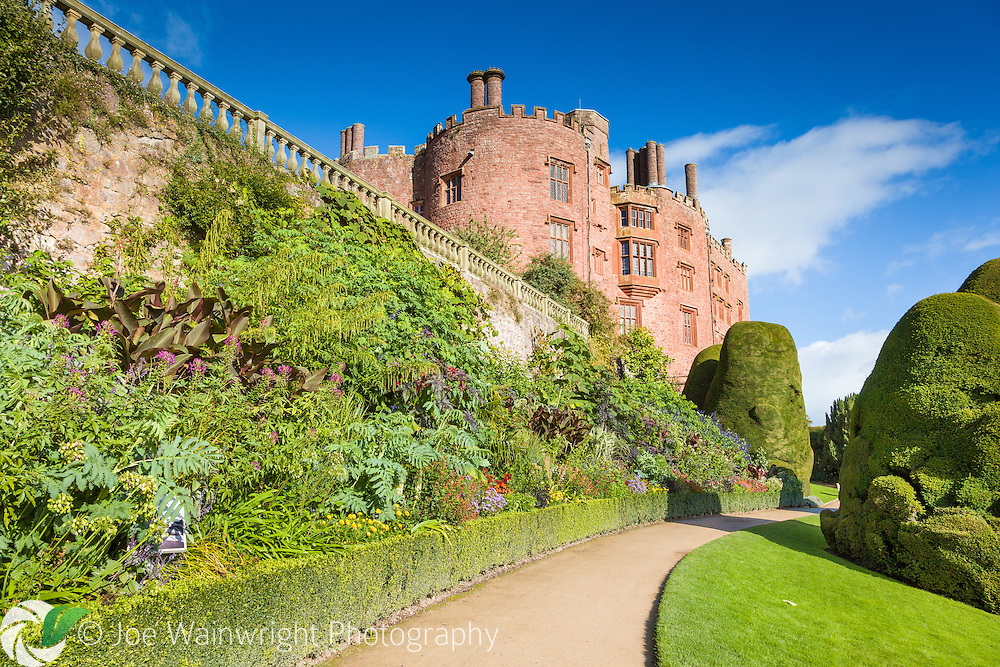 Herbaceous plants, including tender specimens, together with climbers, adorn the border and wall of the upper terrace at Powis Castle, Welshpool.  Strangely shaped, yews also line the path, the result of centuries of clipping combined with periods of neglect. Photographed in October.