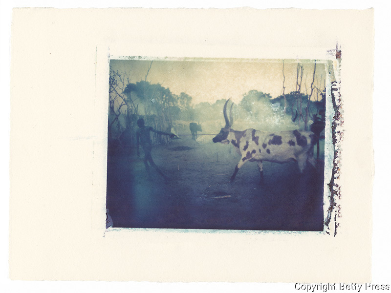 Dinka man tending cattle, South Sudan<br />