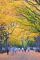 Autumn visitors on the Literary Walk, Central Park