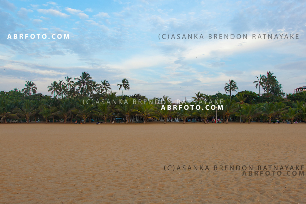 A row of Palm trees and sand of Negombo beach.Negombo is a major city in Sri Lanka, located on the west coast of the island and at the mouth of the Negombo Lagoon