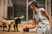 EVA RUPPEL sits with two rescued puppies at her rural property near Kandy, Sri Lanka, on Wednesday, February 21, 2018. Ruppel does not cage the approximate 170 rescued dogs living with her, allowing them freedom to roam and interact in small packs in multiple pens throughout her property, as well as inside her home. Ruppel created Tikiri Trust, with the financial assistance of her father, to rescue and rehome Sri Lanka's street dogs.<br /> <br /> <br /> <br /> It is impossible to visit Sri Lanka without seeing street dogs in nearly every public space, near hotels, guest houses and restaurants, schools, offices, markets, hospitals, police stations, bus terminals, railway stations, temples, etc. These dogs do not have their own homes, but they are usually highly tolerated and are typically fed collectively by people in a particular area.<br /> <br /> According to the NGO, Kandy Association for Community Protection through Animal Welfare (KACPAW), 100 unsterilized dogs will give rise to 3,000 dogs in one year. The Sri Lankan government, as well as several NGOs, work to spay/neuter animals, but there is need to educate the public and maintain funds to stay on top of their efforts.<br /> <br /> Eva Ruppel left Germany for a three-month visit to Sri Lanka, which included time in a Buddhist meditation retreat, and she remains in this island nation 37 years later.<br /> <br /> While married, Ruppel&rsquo;s husband asked that the couple keep only three dogs in their home at any one time, and she respected his wishes. This 60-something year old lost her husband to a ruptured brain blood vessel in 1995 when he was 51 years old, after nine years of marriage. After his death, she began rescuing more and more animals and she now lives with 170 dogs, plus a dozen or so cats.<br /> <br /> With the support of her father, she started Tikiri Trust. Her father passed away in 2011, and he left her an inheritance, which she continues to use to support her cause. <br /> <br /> Ruppel, who is fluent in German, English and Sinhala, said that she has found homes for &ldquo;hundreds