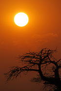 Alberto Carrera, Dawn Sunrise, Baobab, Adansonia digitata, Kubu Island, White Sea of Salt, Lekhubu, Makgadikgadi Pans National Park, Botswana, Africa