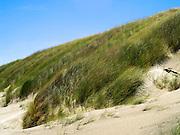Grass and other dune plants stabilize the high sand dunes on the beach at Mason Bay, Stewart Island (Rakiura), New Zealand.