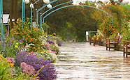 20070604 Garden Rain