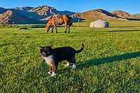 Mongolie. Province de Zavkhan, Campement nomade // Mongolia,  Zavkhan province, nomadic camp