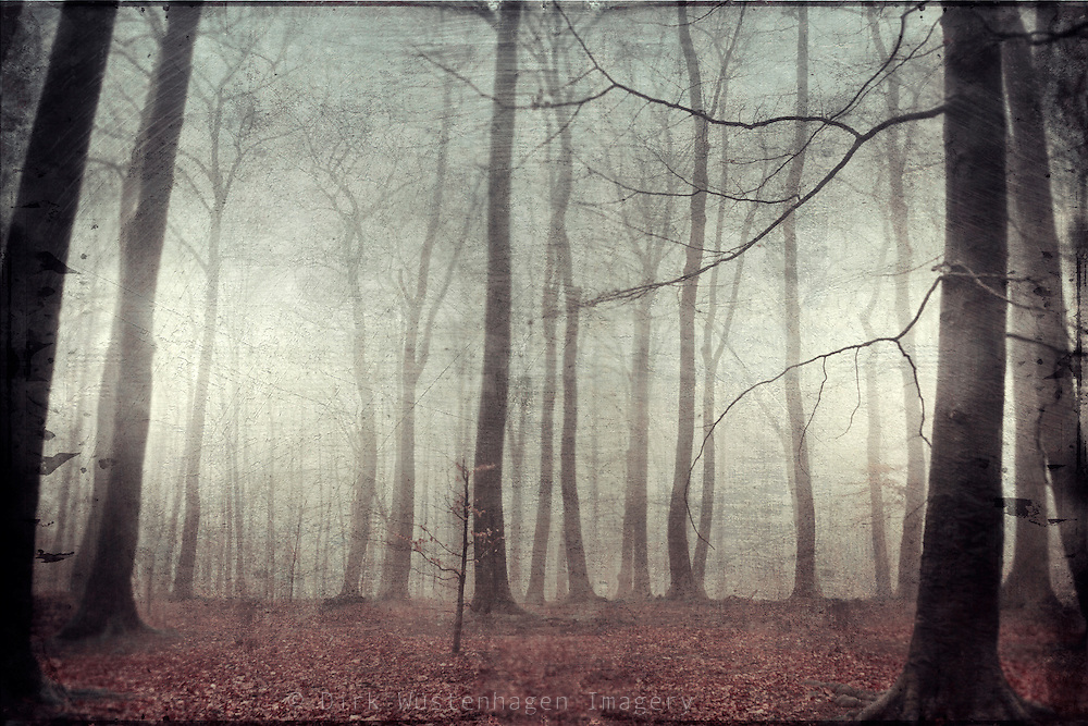 Rainy winter day in a forest. Textured photo.<br /> <br /> Prints &amp; other stuff: http://society6.com/DirkWuestenhagenImagery/mood-scape_Print