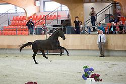 Fry Charlotte, GBR, Don Joe<br /> Longines FEI/WBFSH World Breeding Dressage Championships for Young Horses - Ermelo 2017<br /> © Hippo Foto - Dirk Caremans<br /> 02/08/2017