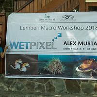 Wetpixel/Mustard Lembeh 2018