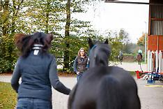 Bowen-Technik für Pferde
