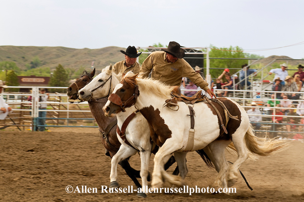 Pickup men Kyle Shaw and Lynn Ashley pick up saddle bronc, Miles City Bucking Horse Sale, Montana, <br /> MODEL RELEASED