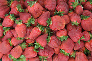 Strawberry production at Shlagel Farms ,  a very diversified 3rd third generation working family farm operated by Russell & Eileen Shlagel and their five children. The farm is located on the northern edge of busy Waldorf, in Charles County, Maryland.