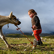 A three-year-old boy is playing with reindeer in a Dukha (Tsaatan) settlement in the taiga, Mongolia Approximately 200 families comprise the Tsaatan or Dukha community in northwestern Mongolia, whose existence is intimately linked to their herds of reindeer. Photo © Robert van Sluis