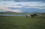 Mongolia. cattle breeders along   - Thula river - Tarnai Gol; At the end of the day the men round the horses up for milking.