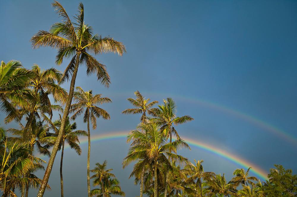 Coconut palm trees, double rainbow and gray, rainy sky; Punaluu, Windward Oahu, Hawaii.