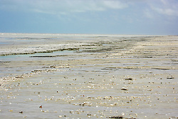 Shells on the sand at Eighty Mile Beach in the Kimberley wet season