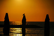 Silhouette of a bird on the beach at sunset. Photographed on the Tel Aviv Beach, Israel in March