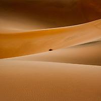 California Desert & Grassland