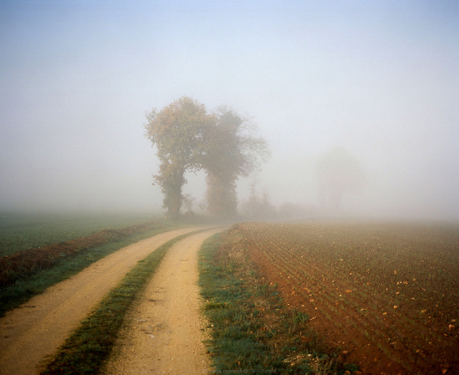 Paysage, Poitou-Charentes, automne 2010.