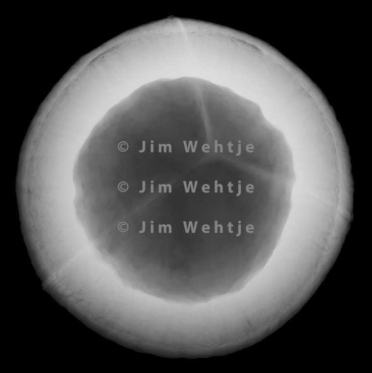 X-ray image of a coconut half (white on black) by Jim Wehtje, specialist in x-ray art and design images.
