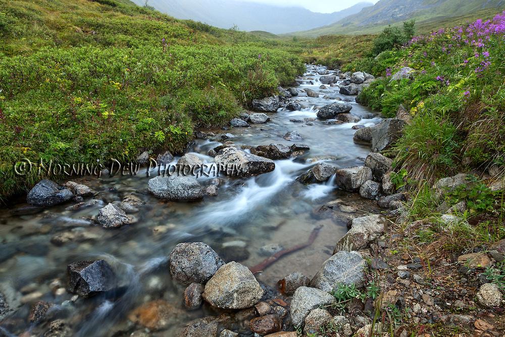 A small creek flows through the green tundra of Hatcher Pass, Alaska