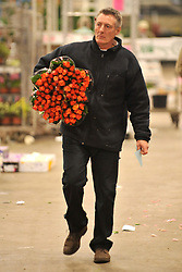 © Licensed to London News Pictures. 15/03/2012. London, UK. A man carries bunches of roses. The Mothering Sunday sales rush is on for flower growers, suppliers, florists and retailers amongst the Flowers at the New Covent Garden Flower Market on March 15th 2012 in London, England. New Covent Garden Flower Market is London's premier wholesale market stocking the widest range of flowers, plants and foliage in the UK. The run up to Mothers' Day is crucial in the flower selling calendar as Mothers' Day sales are condensed into about four days making the market very busy. Traditionally, Mothering Sunday was a day when children, mainly daughters, who had gone to work as domestic servants, were given a day off to visit their mother and family. Today, Mother's Day is a time when children give flowers and cards to their mothers, and generally pamper them..  Photo credit : Stephen SImpson/LNP