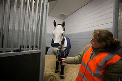 Silvana de Hus and her groom Laurence Gazel<br /> Departure of the horses to the World Cup Finals in Las Vegas from Schiphol - Amsterdam 2015.<br />  © Hippo Foto - Dirk Caremans