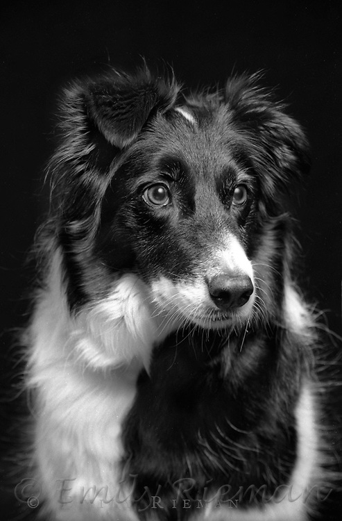 Portrait of a dog shot on black and white film