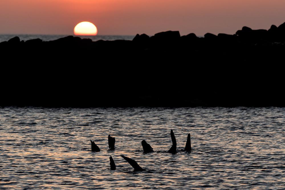 Sea lions in a cove at sunset, San Cristobal Island, Galapagos Islands, Ecuador.