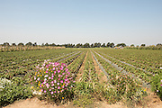 ALBA - Agricultural and Land Based Training Association