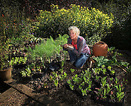 Carol Klein, gardening expert, television presenter and author, planting lettuces in her garden at Glebe Cottage.<br /> <br /> Commissioned by the GUARDIAN WEEKEND MAGAZINE.<br /> <br /> (See 'Tear sheets' gallery)