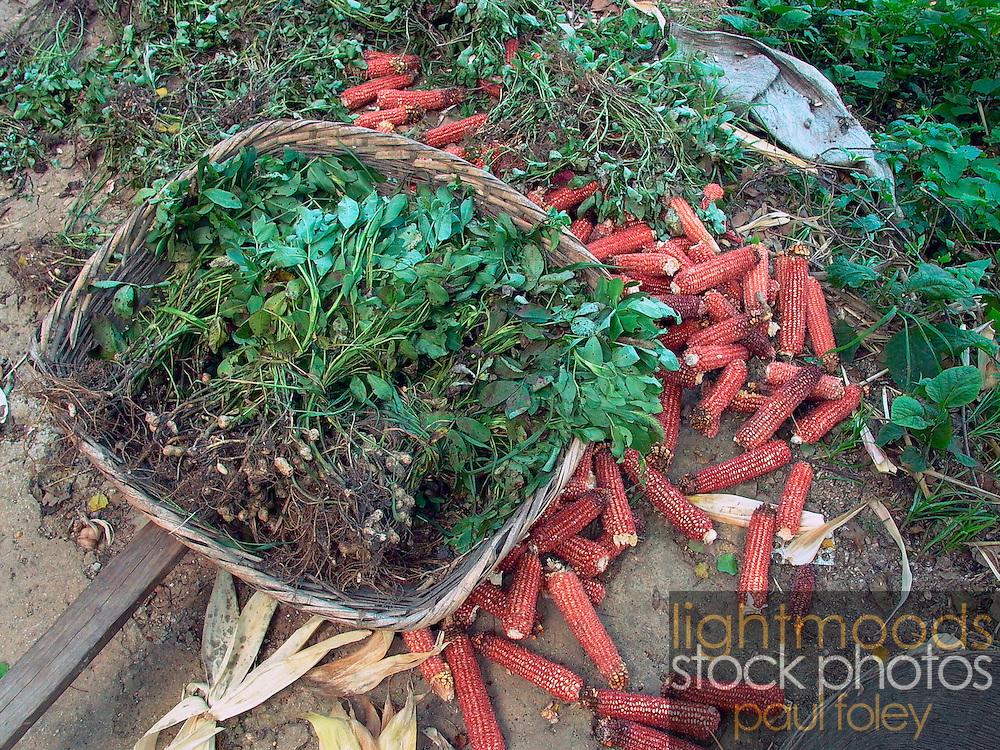 Herbs and Corn near Duyun Guizhou Province China
