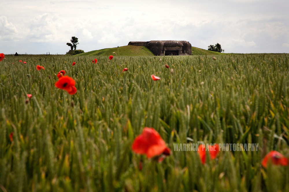 Poppies grow in a field around a German WWII bunker June 13, 2012, in Longues-sur-Mer, France. Normandy is the only place in the world that has seen a consistent mass-pilgrimage of war veterans returning to the lands where they fought. No other lands that have born witness to war - including other WWII battlefields - have drawn veterans back in the way that Normandy has. Along with the veterans come thousands of WWII historical enthusiast and family members of passed veterans. Sixty-eight years on the numbers of veterans returning to the beaches and fields where they fought dwindle, as age and time prevail. (Photo by Warrick Page)