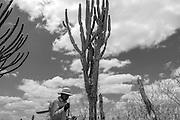 A Comunidade S&iacute;tio Bara&uacute;na Furada fica na cidade de Taquaritinga no agreste Pernambucano. O agreste &eacute; a regi&atilde;o de transi&ccedil;&atilde;o entre o sert&atilde;o e a zona da mata. Tem, portanto, um &iacute;ndice pluviom&eacute;trico maior que o sert&atilde;o, mas a seca que j&aacute; dura cerca de seis anos l&aacute; no sert&atilde;o tamb&eacute;m abateu o agreste, ambos fazem parte do semi&aacute;rido brasileiro. A Comunidade Bara&uacute;na Furada tem cerca de 25 fam&iacute;lias. O Centro Sabi&aacute; faz a assessoria t&eacute;cnica para a fam&iacute;lia de Seu Cl&aacute;udio e Dona Helena desde 2014, ajudando no planejamento das atividades agr&iacute;colas. Oferecendo oficinas, atividades, interc&acirc;mbios, etc. A fam&iacute;lia trabalha com o Sistema agroflorestal sem agrot&oacute;xicos ou queimadas em dois hectares, dos onze &ndash; cultivam diversas plantas, entre elas hortali&ccedil;as, frut&iacute;feras, forrageiras, medicinais, nativas, milho, feij&atilde;o, fava, jerimum, melancia, palma, entre outros. Nos noves hectares restantes predomina a caatinga que &eacute; preservada a mais de trinta anos, onde Seu Cl&aacute;udio e Dona Helena criam cabras e outros animais. Seu Cl&aacute;udio relata que essa propriedade vem sendo repassada de gera&ccedil;&atilde;o a gera&ccedil;&atilde;o, &ldquo; moramos aqui h&aacute; apenas cinco anos, mas a minha mulher nasceu e se criou aqui, passamos um tempo fora, fomos morar na cidade, mas retornamos e n&atilde;o temos pretens&otilde;es de sairmos mas daqui, a preserva&ccedil;&atilde;o da caatinga &eacute; algo que fa&ccedil;o pois crio cabras e elas se adaptam muito bem a vegeta&ccedil;&atilde;o, tenho uma oferta de alimentos para elas, as cabras gostam de folhas por isso mantenho essa &aacute;rea preservada para manter o equil&iacute;brio de outras esp&eacute;cies que tem a caatinga como seu ref&uacute;gio natural.&rdquo;           <br /> <br /> Helena Maria de Ara&uacute;jo, 59<br /> Claudomiro 