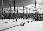 B/W winter snow landscape of dead trees in an old forest fire burn area with snow covered mountains in the background.