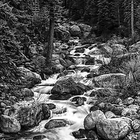 Sequoia National Park black and white