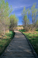 Scott M. Matheson Wetlands Preserve near Moab, UTAH