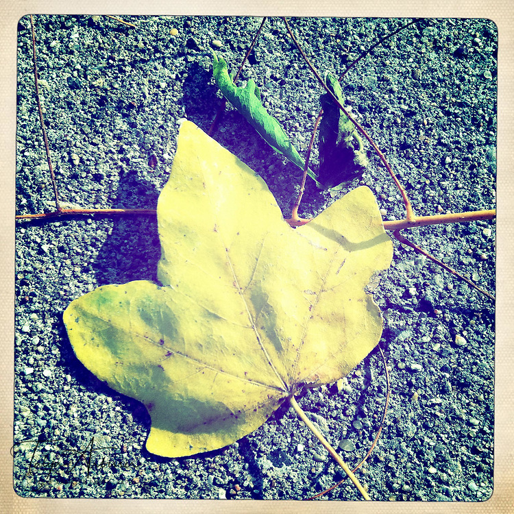 Grounded leaf in color - Davenport, Iowa