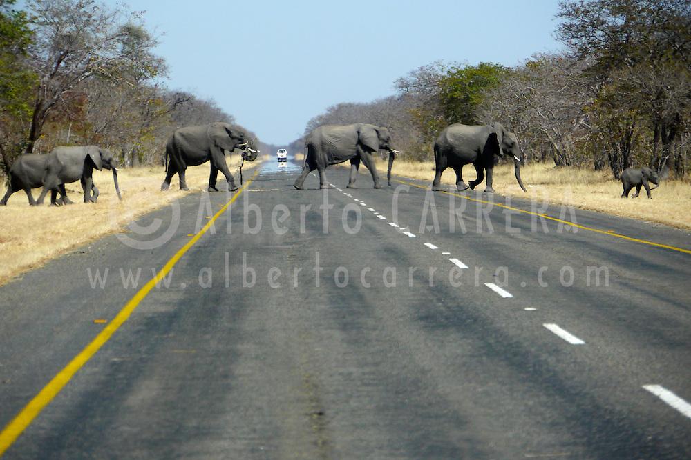 Alberto Carrera, Elephants crossing the road,  Chobe National Park, Botswana, Africa