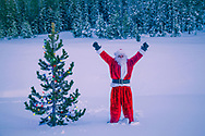Santa Claus raises his arms beside a lone pine tree in the wilderness, decorated with Christmas lights. http://www.gettyimages.com/detail/photo/santa-claus-with-lighted-tree-in-forest-high-res-stock-photography/470803977