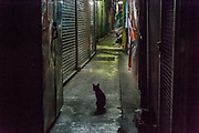 Cats roaming at night in Chinatown