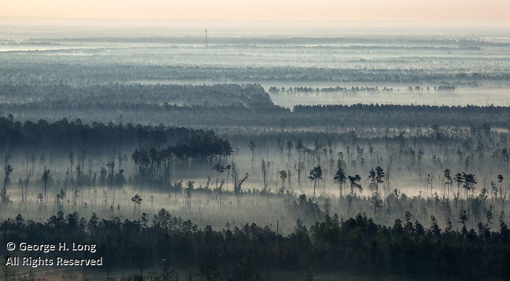 Trees and fog aerial in St. Tammany Parish near Abita Springs, Louisiana