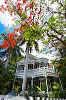 Royal poinciana tree (flame tree) and house, Key West, Florida Keys, Florida USA