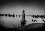 Exposed tufa tower in saline Mono Lake, California.  The tufa towers, which form underwater when springs rich in calcium meet lake waters rich in carbonates, emerged from the lake when the Los Angeles Department of Water and Power extended an aqueduct system into the Mono Lake basin and diverted tributary streams to LA for drinking water in 1941.  After a decades-long effort by environmentalists,the tributaries were diverted back into the lake  in 1994 raising the water level but not enough to resubmerge the tufa towers.