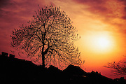 Silhouette of Tree during sunset